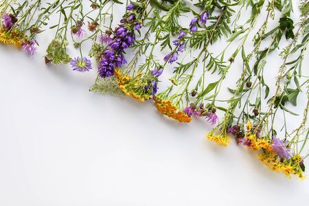 Summer medical herbs on white background. Bouquet of tansy and thorny burdock wild flowers