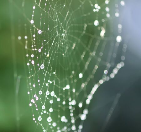 Wet spider web in rain drops. Summer nature details