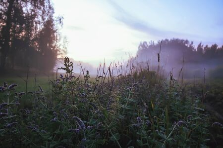 Evening mist on a field in countryside at summer