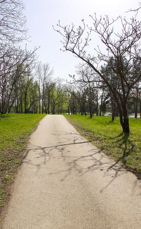 Beautiful spring landscape with green trees and path Zdjęcie Seryjne