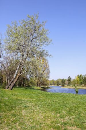 Beautiful spring landscape with green trees and pond