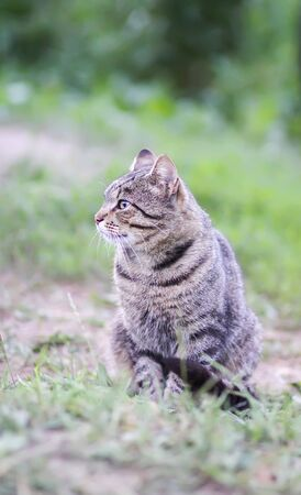 Funny young cat outdoors in countryside