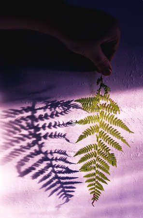 Green fern plant leaf and shadows on rough light surface.