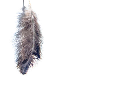 Ostrich feather and shadows on light background.