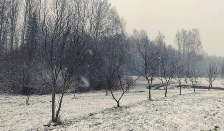 Winter landscape. Trees and snow covered fields.