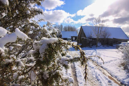 Winter landscape. Rural house building behind the juniper plant branches in fresh snow.