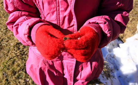 Child's hands in red warm mittens with the prickly wild plant part outdoors Reklamní fotografie
