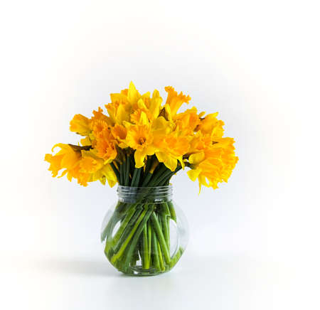 Beautiful bouquet of spring yellow narcisus flowers in glass transparent vase. Floral composition or daffodils on white background.