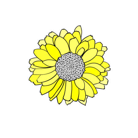 Vector colorful illustration of Rudbeckia flower