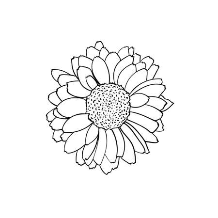 Vector illustration of Rudbeckia flower in sketched style