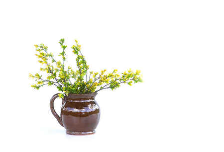 Spring tree branches with first green leaves in ceramic vase on white background.
