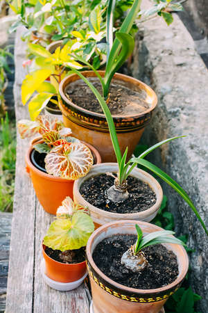 Flower pots with green plants outdoors on a wooden bench