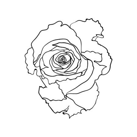 Rose flower. Graphical floral element.