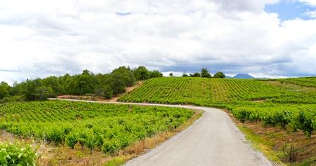 A vineyard in the region of Bierzo