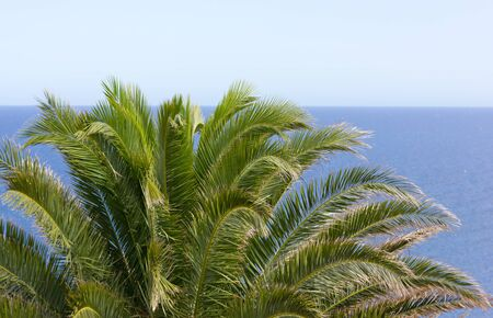Palm,sea and blue sky  Stock Photo - 15190262