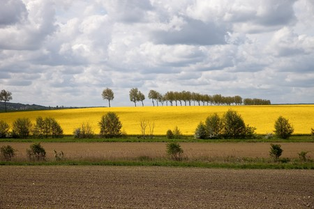 Beautiful spring landscape and rapeseed field. photo