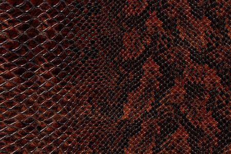 the reptile: High quality snake skin pattern.