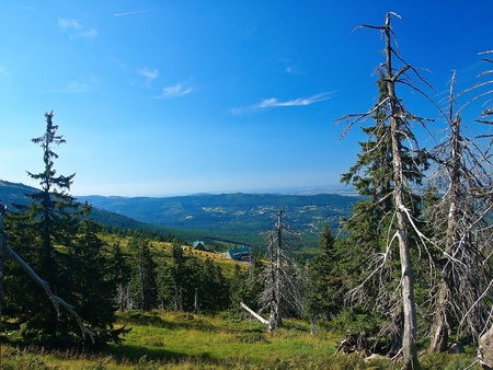 Effect of environmental pollution - a dead tree. Giant Mountains, Poland. photo