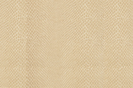 High quality snake skin pattern. Stock Photo - 9413292