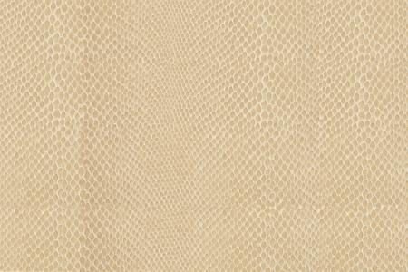 High quality snake skin pattern. Stock Photo - 9413292