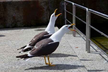 gracefully: Sea gulls gracefully poses for a photo.