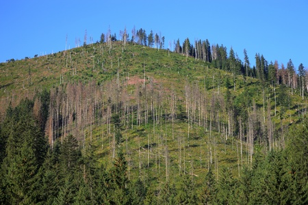 Effect of environmental pollution - a dead tree  Tatra Mountains, Poland  photo