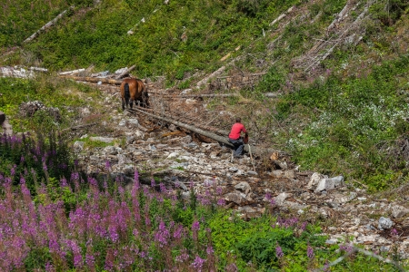 forestry industry: Hard work of man and horse in inaccessible mountain areas.