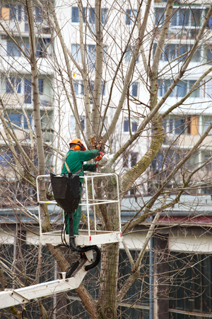 Workman on articulated high platform trimming branches of tree