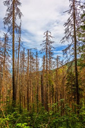 tress: Dead tress in the Tatra mountains