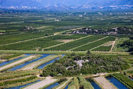 kalnik: View of a vineyard in Dalmatia, Croatia  Stock Photo
