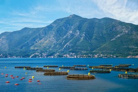魚の海、クロアチアに直接タンクと繁殖します。
