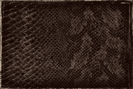 art materials: Dark old grunge snake skin background or texture.