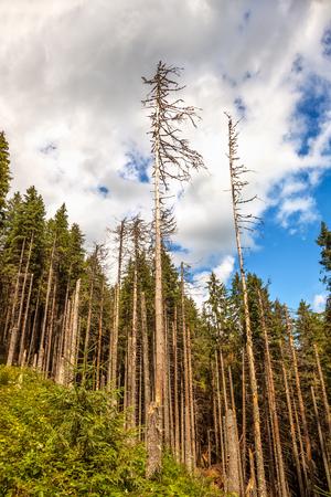 deforestacion: Las enfermedades y la deforestación a lo largo de las laderas de las montañas de Tatra, Polonia.