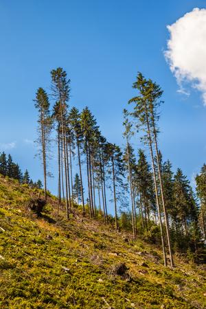 deforestacion: Las enfermedades y la deforestaci�n a lo largo de las laderas de las monta�as de Tatra, Polonia.