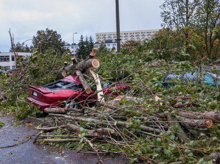 Big tree falls and destroying a parked car. Stok Fotoğraf