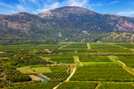 kalnik: View of a vineyard in Dalmatia, Croatia.