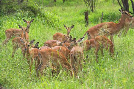 creche: Impala Creche