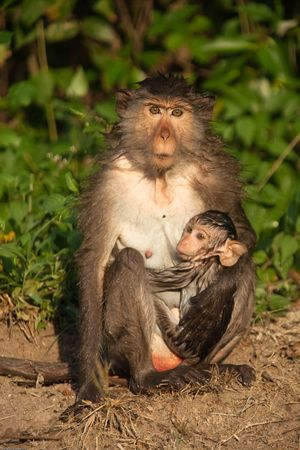 mother and son,thai monkey