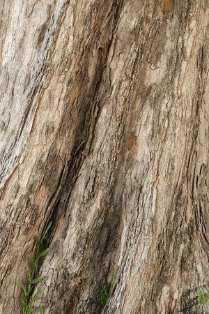 bark tree and little grass