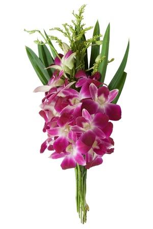 magenta orchid bouquet (orchidaceae)