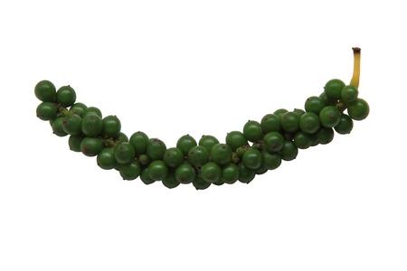 unripe green pepper (piper nigrum linn. piperaceae) Stock Photo