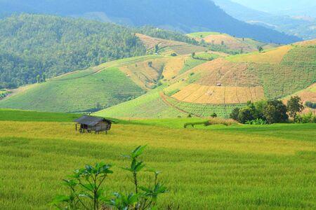 paddy rice field@Chomthong,Chiangmai Thailand photo