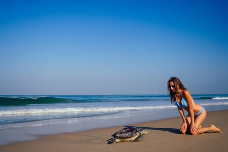 copyspase travel girl posing in a blue bikini swimsuit next to a big male turtle lifestyle vacation paradise untouched deserted beach good morning.tourism guide concept