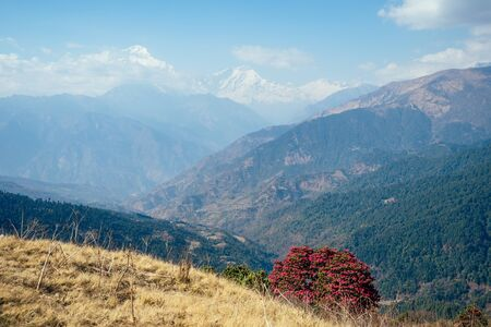 the nature of the Himalayas in the spring. mountains and blossoming beautiful trees. the concept of tourism and trekking in the mountains