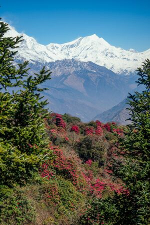 beautiful view of the landscape of the Himalayan mountains. Snow-covered mountain tops and flowering trees. trekking concept in the mountains 写真素材