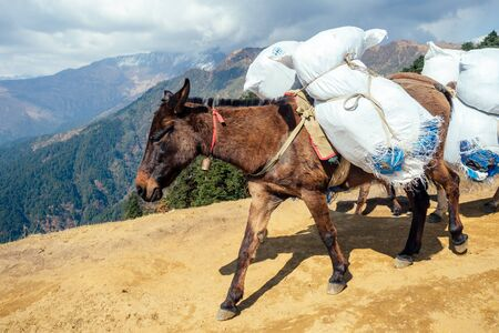 donkey laden with a load against the backdrop of beautiful naturel in Nepalese Himalayas.