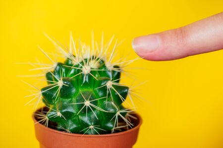green cactus and finger pricked on the needle on a yellow background Stok Fotoğraf
