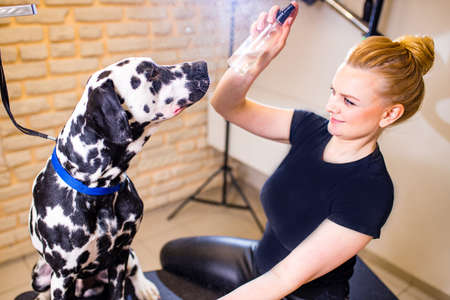 Positive female with glad expression and her dalmatian dog being satisfied in grooming spa . Domestic animals and people