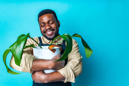 latin man gardener holds pot with a plants in studio blue background