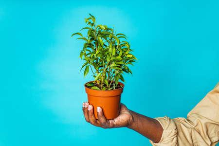 brazilian gardener man holding garden items in studio blue background